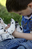 Boy with his puppy Stock Photos