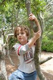 A boy in his tree. A four year old boy climbing a tree Royalty Free Stock Photo