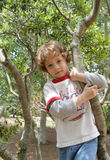 A boy in his tree. A four year old boy climbing a tree Royalty Free Stock Photography