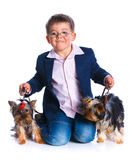 Boy with his Yorkshire terriers Stock Photos