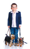 Boy with his Yorkshire terriers Royalty Free Stock Photography