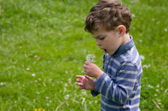 Boy hold dandelion. Boy hold in hend dandelion. He draws a deep breath of air to blow on it. He is dressed in blue stripy shirt. He is curly-headed. Background Stock Image