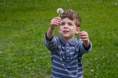 Boy hold dandelion overhead. Boy hold dandelion in hand overhead. He is smiling. He is dressed in blue stripy shirt. He is curly-headed. Background is green Stock Images
