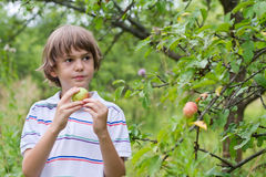 Boy holding an apple next to an apple tree. In a garden Stock Photo
