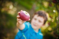 Boy holding an apple Royalty Free Stock Photos