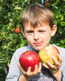 Boy holding apples in an orchard Stock Photography