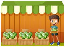 A boy holding a basket of watermelons Royalty Free Stock Photo