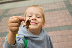 Boy holding a beetle. Boy holding a large insect Stock Images