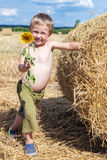 Boy holding a blooming sunflower Royalty Free Stock Photography