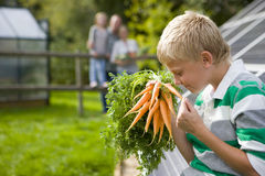 Boy holding bunch of carrots with family in background Stock Photography