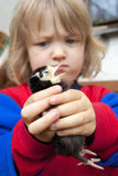 Boy holding a chick Royalty Free Stock Images