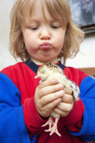 Boy holding a chick Royalty Free Stock Photography