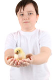 Boy holding a chicken Stock Photography