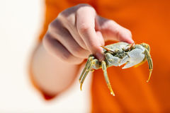 Boy holding crab Royalty Free Stock Photography