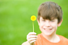 Boy Holding a Dandelion Stock Images