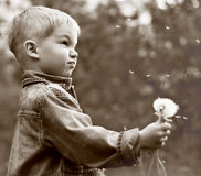 Boy holding dandelion 'clock'. Portrait of charming  small boy holding in his hand a dandelion 'clock' with seeds blowing away in the wind Stock Images