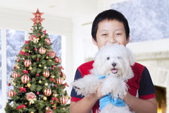 Boy holding dog with christmas tree at home Stock Image