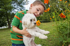 Child puppy dog maltese wildflower Stock Images