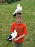 Boy holding a dove Stock Images