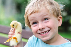 Boy holding a duckling Stock Photography