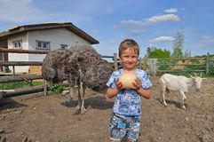 A boy holding an egg African ostrich. Russian farm. A boy holding an egg African ostrich in the aviary with the animals Stock Images
