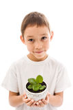 Boy holding flower Stock Photos