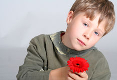 Boy Holding Flower. Young boy holding a red gerber daisy royalty free stock images