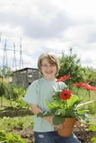 Boy Holding Flower Pot In Garden Stock Images