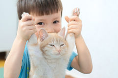 Boy holding forelegs of lazy ginger cat Royalty Free Stock Image