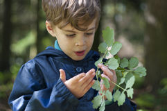 The boy is holding herbs. Four year old boy hold the sprig of medicinal plants. He draws on his hand with juice of medicinal plant Royalty Free Stock Image