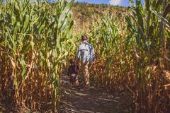 Boy holding his father`s hand walking thru a sugar cane field on a sunny day stock photo