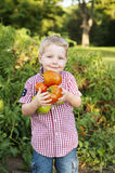 Boy holding homegrown tomatoes Stock Photos