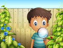 A boy holding a magnifying glass to see the bugs stock illustration