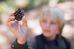 Boy holding pine cone in forest Stock Image