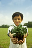 Boy holding plant Stock Images