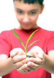 Boy holding plant in hands Stock Photos