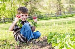 Boy holding radishes Spring garden Stock Image