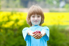 Boy Holding Red Apple in the Garden Royalty Free Stock Photo