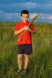 Boy holding reeds Royalty Free Stock Photos