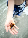 Boy holding a seashell on the beach Royalty Free Stock Photography
