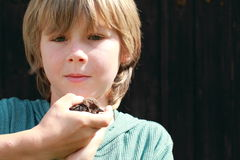 Boy holding a small bird Royalty Free Stock Photo
