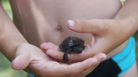 Boy Holding a Small Turtle in the Palm of your Hand that Creeps. Slow Motion. In 96 fps. A small palm of a boy with a turtle in nature stock video footage