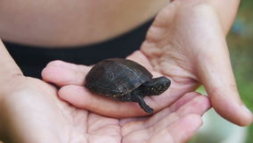Boy Holding a Small Turtle in the Palm of your Hand that Creeps. Slow Motion. In 96 fps. A small palm of a boy with a turtle in nature stock footage
