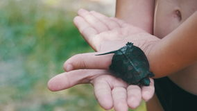 Boy holding a small turtle in the palm of your hand that creeps. Slow Motion. In 96 fps. A small palm of a boy with a turtle in nature stock video