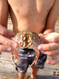 Boy Holding Stone Crab Stock Photo