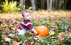 Boy Holding On To Pumpkin Stem Royalty Free Stock Image