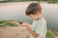 The boy is holding a toad Stock Photo