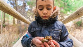 Boy holding a toad on a wooden bridge. In winter, with the cold of the morning in the mountain and the hair hood of the black jacket that shelters the neck of stock photos