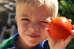 Boy holding tomato in garden. A young boy holds a ripe home-grown tomato Royalty Free Stock Photo