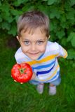Boy holding a tomato Stock Images